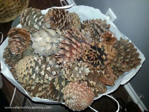 A whole LOT of pinecones
